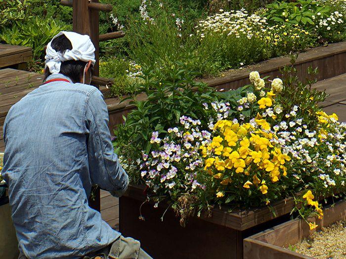 花壇の作業をする男性